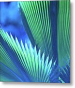Photograph Of A Royal Palm In Blue Metal Print