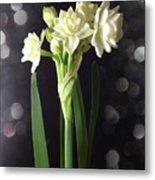 Photograph Of Narcissus Erlicheer A White Flower Metal Print