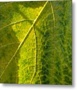 Photosynthesis In Progress Metal Print by Everett Bowers