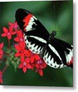 Piano Key Butterfly Metal Print