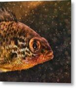 Pices In Aquarium Metal Print