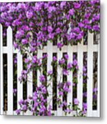 Picket Fence Rhododendron Metal Print