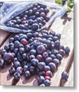 Picking Whortleberries Metal Print