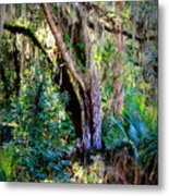 Picnic Time In Florida Metal Print