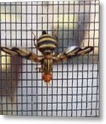 Picture Winged Bee Fly On Screen     Spring      Indiana Metal Print