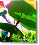 Piercing Sea Grapes Metal Print