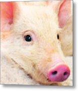 Pig Art - Pretty In Pink Metal Print