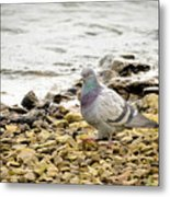 Pigeon Close To The River Metal Print