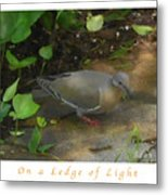 Pigeon Poster Metal Print