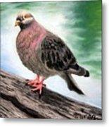 Pigeon Toes Metal Print