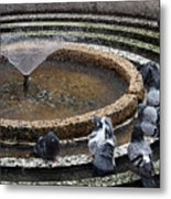 Pigeons Are In The Fountain Refreshes Metal Print