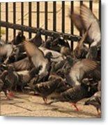 Pigeons In Venice Metal Print