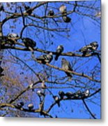 Pigeons Perching In A Tree Together Metal Print