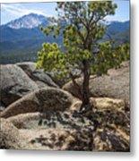 Pikes Peak Bristlecone Metal Print