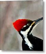 Pileated Woodpecker Up Close Metal Print