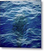 Pilot Whale 9 The Mermaid  Metal Print