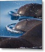 Pilot Whales 1 Metal Print