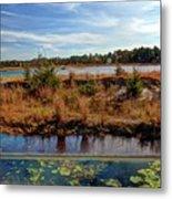 Pine Barrens Bog In New Jersey Metal Print