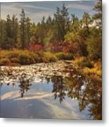 Pine Barrens New Jersey Whitesbog Nj Metal Print