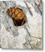 Pine Cone On Birch Bark 8021 Metal Print