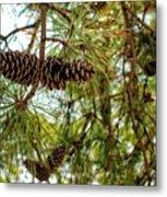 Pine Cones Metal Print