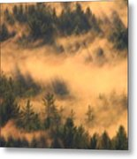 Pine Forest And Fog Metal Print
