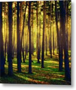 Pine Forest In La Boca Del Asno-segovia-spain Metal Print