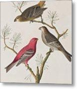 Pine Grosbeak Metal Print