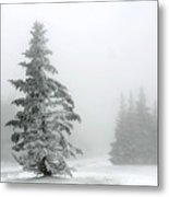Pine In Snow Metal Print
