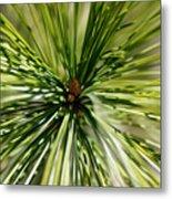 Pine Needles Metal Print