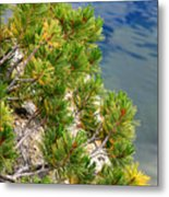Pine Needles Over Water Metal Print