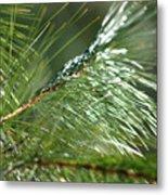 Pine Needles Series 1 Metal Print