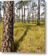 Pine Savanna II Metal Print