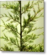 Pine Shower Metal Print
