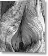 Pine, Split Trunk, Sierra Nevada Mountains, Ca Metal Print