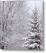Pine Tree - Winter Scene Metal Print