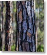 Pine Tree Bark Metal Print