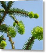 Pine Tree Branches Art Prints Blue Sky Botanical Baslee Troutman Metal Print