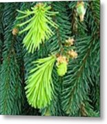 Pine Tree Branches Art Prints Conifer Forest Baslee Troutman Metal Print