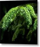 Pine Tree Brunch Metal Print by Svetlana Sewell