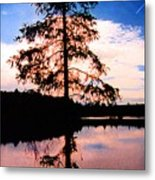 Pine Tree By Peck Lake 5 Metal Print