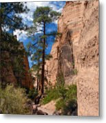 Pine Tree Canyon Metal Print