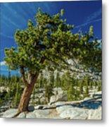 Pine Tree In Yosemite Metal Print