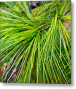 Pine Tree Needles Metal Print