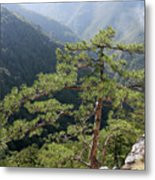 Pine Tree On Mountain Landscape Metal Print