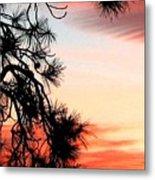 Pine Tree Silhouette Metal Print