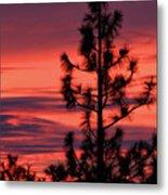 Pine Tree Sunrise Metal Print