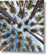 Pine Tree Vertigo Metal Print