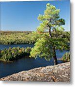Pine Tree With A View Metal Print