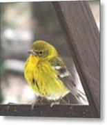 Pine Warbler Metal Print